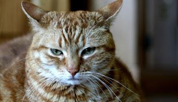 Woran erkennt man das Alter einer Katze