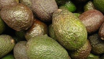 Ist Avocado Obst oder Gemüse
