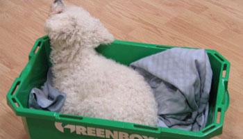 Wie bekommt man graue Wäsche wieder weiss