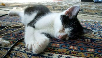 Was hilft bei Katzenschnupfen