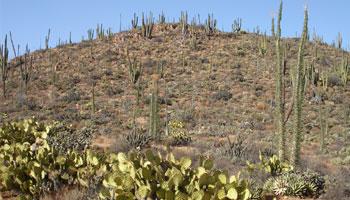 Welche Pflanzen gibt es in der Wüste