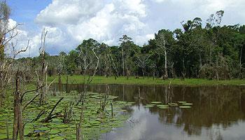 Welche Tiere gibt es im Regenwald