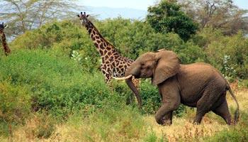 Was ist eine Safari