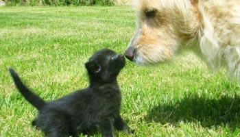 Was lieben Hunde