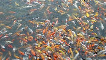 Welche Fischarten gibt es