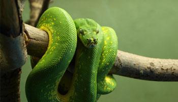 Welche Schlangenarten gibt es
