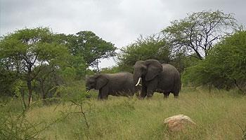 Welche Tiere gibt es in Afrika