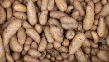 Wie koche ich Kartoffeln