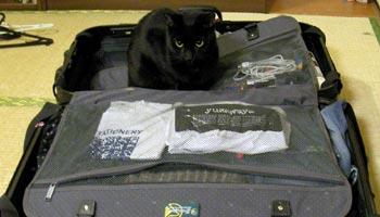 Wie packe ich einen Koffer
