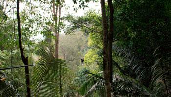 Wie viele Regenwälder gibt es