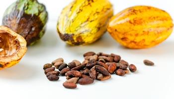 Woher kommt der Kakao